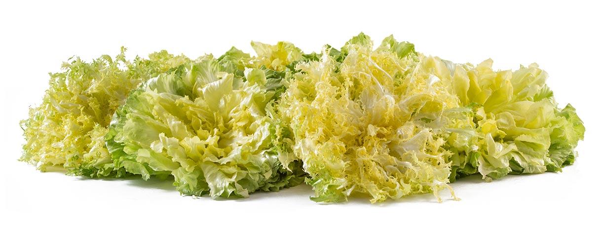 Composizione-indivia-riccia-e-scarola-lady-leaf