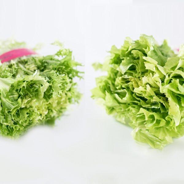 ceppi-insalata-indivia